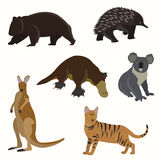 Set of australian animals. Kangaroos, wombat, echidna cat koala platypus Stock Image