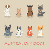 Set of australian dogs Royalty Free Stock Photo
