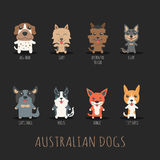 Set of australian dogs Stock Photo