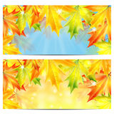 Set of autumn backgrounds Royalty Free Stock Images