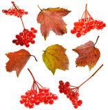 Set with autumn berries Stock Photography