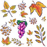 Set of autumn elements: Orange and yellow leaves, Rowan berries, a bunch of grapes. sketch vector illustration