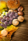 Set of autumn fruit Stock Photography