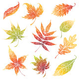 Set of autumn grunge leafs. Thanksgiving Royalty Free Stock Photos