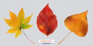 Set of autumn leaf. Vector  illustration Stock Images