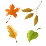 Set of autumn leaves. Set of different colorful autumn leaves Stock Photography