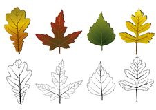 Set of autumn leaves. Royalty Free Stock Photography