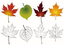 Set of autumn leaves. Royalty Free Stock Image