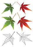 Set of autumn leaves. Royalty Free Stock Photos