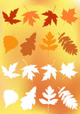 Set autumn leaves. Stock Images