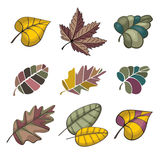 Set of autumn leaves Stock Image