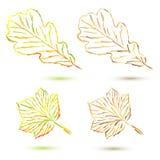 Set autumn leaves Stock Photography