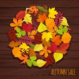 Set of autumn leaves and berries Royalty Free Stock Photo