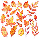 Set of autumn leaves and berries Stock Image