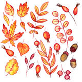 Set of autumn leaves and berries Stock Images