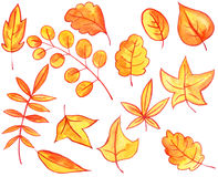 Set of autumn leaves and berries Stock Photography