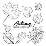Set of  autumn leaves. Black and white outline hand drawn fall leaves. Isolated design elements Royalty Free Stock Photo