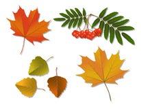 Set of autumn leaves Royalty Free Stock Photo