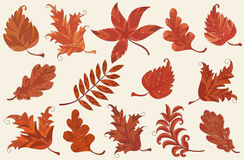 Set of autumn leaves Stock Photography