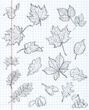 Set of autumn leaves, chestnuts, acorns and viburnum on a background of exercise book in a cage. black contour Royalty Free Stock Photography