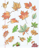 Set of autumn leaves, chestnuts, acorns and viburnum on a background of notebook sheet in a cage.  Royalty Free Stock Image
