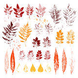 Set of autumn leaves. Colorful imprints foliage. Vector illustration Stock Photos