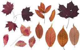 Set of autumn leaves. Colors of autumn. Herbarium of bright colors. stock image