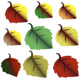 Set of autumn leaves design elements. Fall. Stock Photo