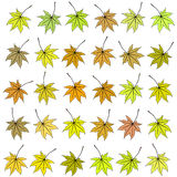 Set of autumn leaves of different color. Raster Stock Image