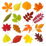 Set of autumn leaves Stock Images