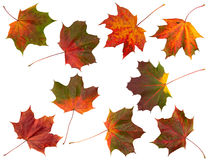 Set of Autumn leaves, isolated. stock photos