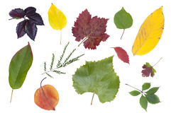 Set of autumn leaves Royalty Free Stock Images
