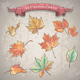 Set of autumn leaves of maple, chestnut and other trees. Royalty Free Stock Images