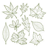 Set of autumn leaves Nature silhouette Icon line Vector illustration Royalty Free Stock Images