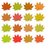 Set of autumn leaves. Raster Royalty Free Stock Image
