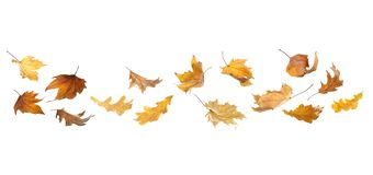 Set of autumn leaves royalty free stock photography