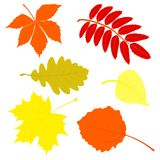 Set of autumn leaves. Royalty Free Stock Images
