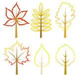 Set of autumn leaves. Royalty Free Stock Photo