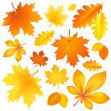 Set autumn leaves Royalty Free Stock Image