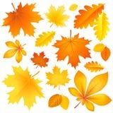 Set autumn leaves Royalty Free Stock Image
