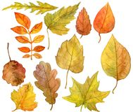 Set autumn leaves in watercolor Stock Photography