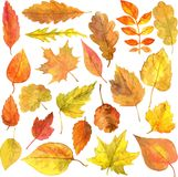 Set of autumn leaves in watercolor Royalty Free Stock Image