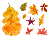 Set of autumn leaves. watercolor illustration Royalty Free Stock Images