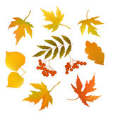 Set of autumn leaves Royalty Free Stock Photos