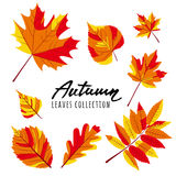 Set of  autumn leaves. Yellow and red hand drawn fall leaves. Royalty Free Stock Images