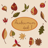 Set of autumn leaves for your design. Stock Photo