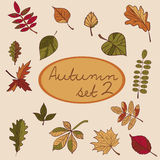 Set of autumn leaves for your design. Royalty Free Stock Image