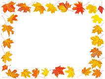 Set of Autumn maple leaves with place for your text Stock Images