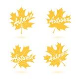 Set of autumn maple leaves Stock Image