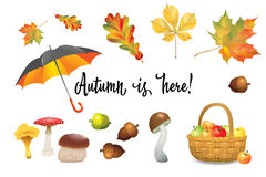 Set of autumn objects. Mushrooms, umbrella, apples and fall leaves. Vector illustration collection Stock Images